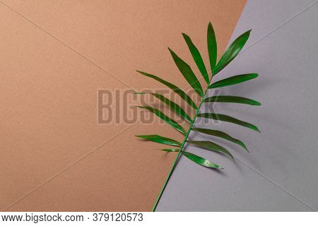 Tropical plant leaf on brown and grey paper background. Flat lay, top view, minimal design template with copyspace.