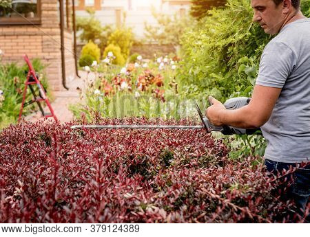 A Gardener Trimming Shrub With Hedge Trimmer