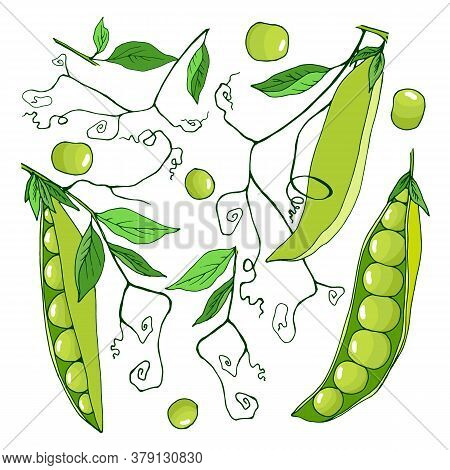Set Of Elements Of Fruits And Leaves, Stalks Of Peas, Vector Illustration, Isolate On A White Backgr