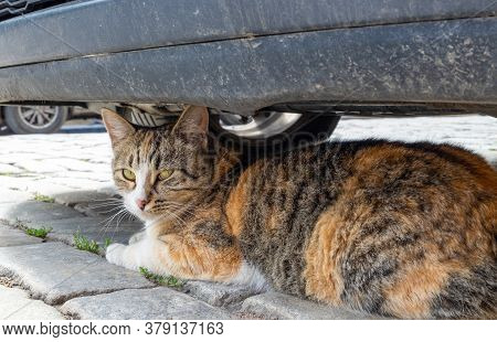 A Street Stray Cat Sits Under A Parked Car On A Cobblestone Pavement. The Concept Is Homeless Animal