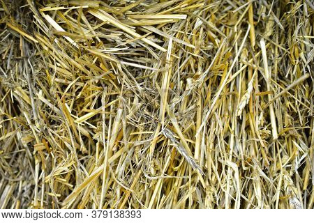 Ears And Stalks In A Straw Haystack Close Up