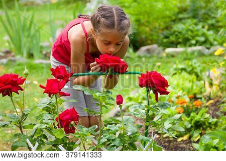 Cute Little Girl Wearing A Red Tank Top Is Smelling Beautiful Red Roses In A Summer Garden