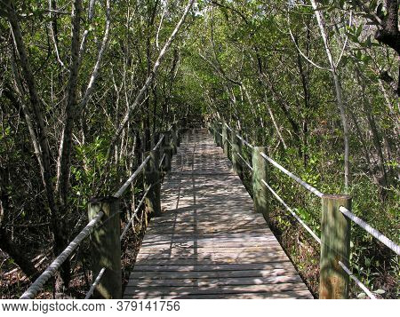 Boardwalk At The Environmental Learning Center In Florida