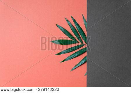 Tropical plant leaf on coral and grey paper background. Flat lay, top view, minimal design template with copyspace.