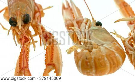 Group of shrimps lying on white background. Scampi goes around. Copy space.
