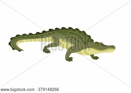 Green Crocodile Character Big Carnivore Reptile Cartoon Animal Design Flat Vector Illustration Isola