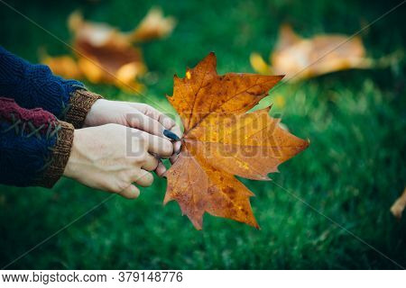 Nice Sunny Weather. Female Hand With Yellow Leave. Young Woman With Beautiful Autumn Leave. Autumn Y
