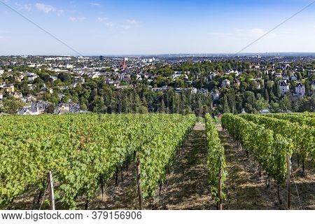 Scenic View To Wiesbaden With Vineyards In Foreground