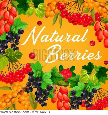 Berries And Fruits, Vector Farm Or Garden Food. Red And Black Currant Branches, Gooseberry, Cranberr
