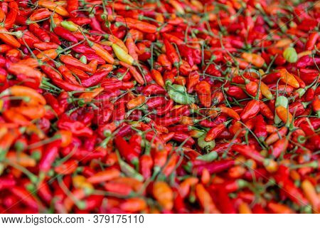 Red Chilli Peppers In Large Amounts, Top View.