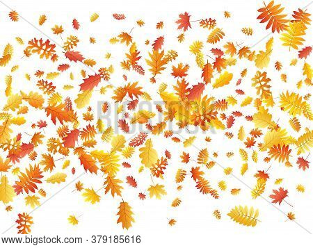 Oak, Maple, Wild Ash Rowan Leaves Vector, Autumn Foliage On White Background. Red Orange Gold Sorb D