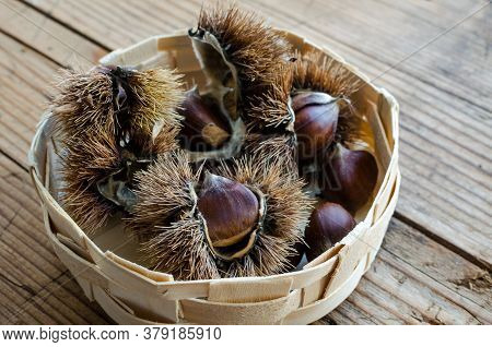 Chestnuts And Helicons On Wooden Background. European Species Sweet Chestnut Castanea Sativa. Close