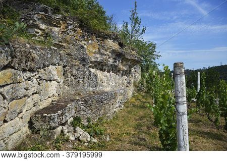 Old Limestone Stone Wall And Vine Row On The Mountainside