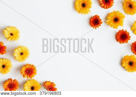 Autumn Composition. Gerbera Flowers On White Background. Autumn, Fall Concept. Flat Lay, Top View, C