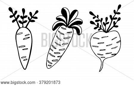 Vector Doodle Illustration Of Carrots And Turnip. Hand Drawn Healthy Farm Vegetables Isolated On Whi