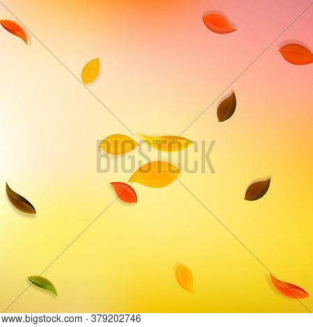 Falling Autumn Leaves. Red, Yellow, Green, Brown Neat Leaves Flying. Explosion Colorful Foliage On A