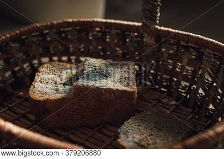 Mold On Bread, A Piece Of Rye Bread With White And Green Mold. Best Before Date Has Expired A Long T