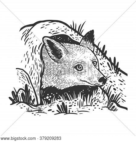 Fox Looks Out Of Hole Sketch Engraving Vector Illustration. T-shirt Apparel Print Design. Scratch Bo