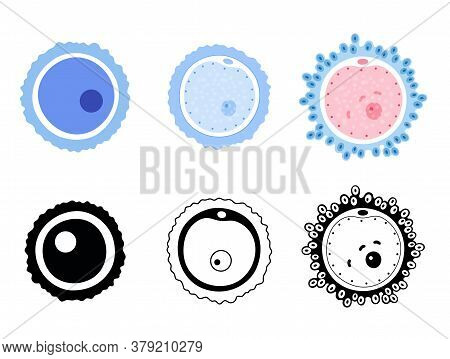 Woman Egg Cells Icon Set. Fertilisation, Gynecology And Genetic Concept. Human Sexual Reproductive S