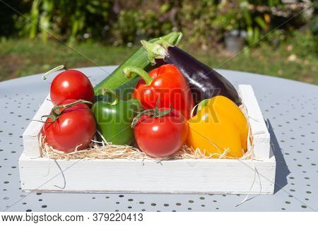 Tomatoes, Zucchinis, Peppers, Eggplant In A Crate After Harvesting In A Vegetable Garden