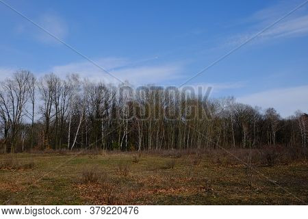 Edge Of A Leafless Forest In March. Bare Spring Trees. Landscape.