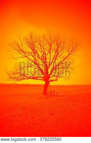 A Beautiful Branchy Tree In The Plain. Landscape. Saturated Bright Orange Toning.