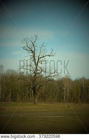 A Beautiful Branchy Tree In The Plain. Landscape. Vignette.