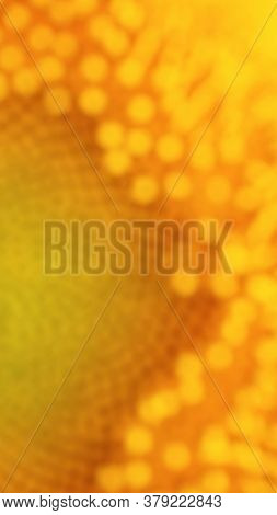 Flower Of A Sunflower. Vertical Yellow Blurred Phone Wallpaper. Vivid Plant Background Or Backdrop O