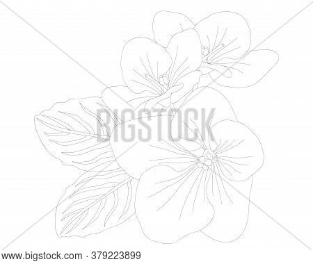 Violet Flower Isolated On The White Background. Violet Coloring Page Or Book.