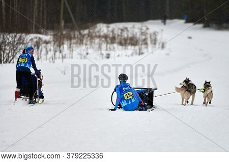 Verkhoshizhemye, Russia - 03.08.2020 - Husky Sled Dog Racing. Musher Falls Off Sled. Koltco Fortuny