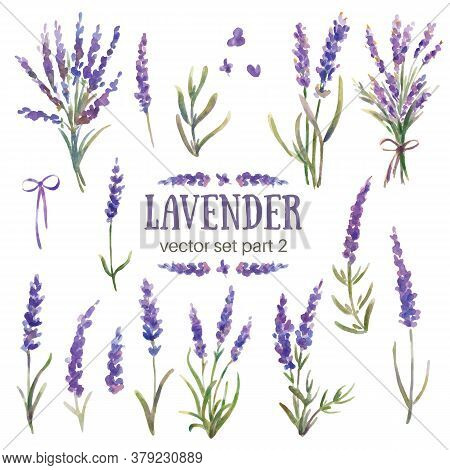 Vector Illustration Of Lavender. Watercolor Hand-painted. Flowers, Branches, Bouquets Of Lavender. P