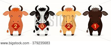 2021 Chinese New Year Vector Illustration With Cute Cartoon Oxen Holding Cards With Numbers, Isolate