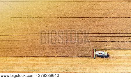 Combine Harvester Gathers Grain On A Wheat Field, Top View. Harvest Time. Aerial Drone View.