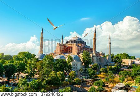 Bird And Hagia Sophia At Sunset In Istanbul, Turkey