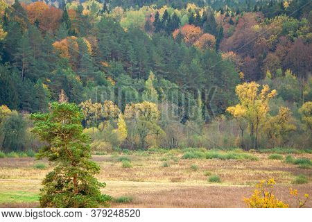 Gorgeous Autumn Forest Panorama. Colorful Fall Scenery. Panoramic Colorful Autumn Forest Landscape.