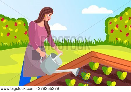 Gardening Illustration. Woman Dressed Apron Is Pouring Seedlings In The Garden From A Watering Can.