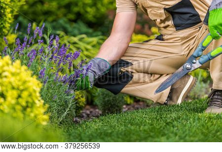 Caucasian Gardener In His 40s With Large Scissors In Hand And The Garden Maintenance Job.