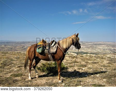 Horse With A Saddle Looks From The Mountain Over The Plain