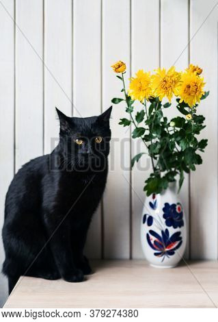 Black Cat With Yellow Eyes Near A Vase With Yellow Chrysanthemums On A White Background. Selective F