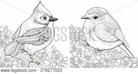 Coloring Pages. Two Birds Sitting On Cherry Blossoming Tree Branch. Line Art Design For Adult Colour