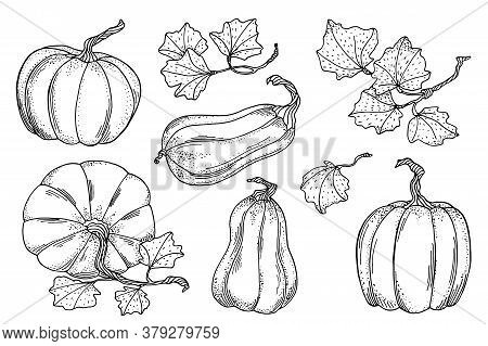 Outline Vector Pumpkins With Leaves Set. Hand Drawn Black Contour Gourds Isolated On White Backgroun
