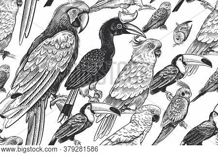 Black And White Summer Tropical Pattern. Exotic Birds Parrots And Toucans. Animal Background. Wild W