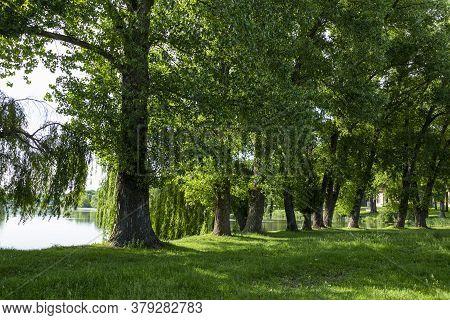 Old Landscape Park In The Palace And Park Ensemble In Village Samchyky. Ukraine. Tourist Landmark
