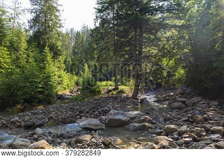 Morning In Forest Mountain River. Beautiful Nature Of Carpathians. Ukraine. Summer Mountain Landscap