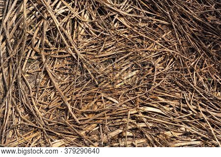 Scattered Stalks Of Wheat Turned Yellow. Straw, Dry Straw Textured Background, Vintage Style For Des