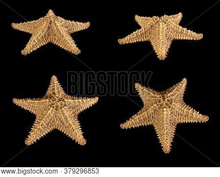 Set Of Starfish Brown Isolated On A Black Background. Close-up. Side View