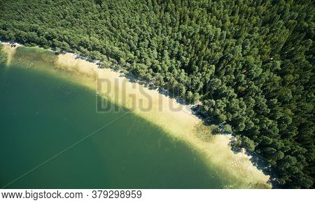 White Sand Beach On Forest Shore