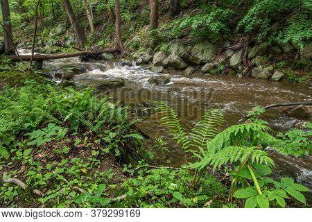 Summer Ferns In The Shady Woodlands Surrounding Roaring Rocks Stream In Warren County New Jersey.