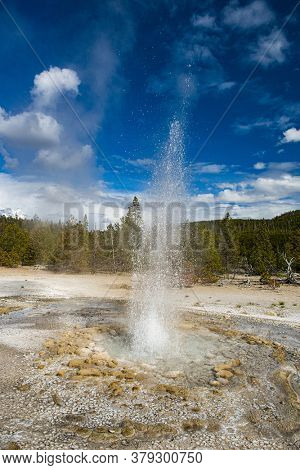 Vixen Geyser erupting. Norris Geyser Basin, Yellowstone National Park, USA