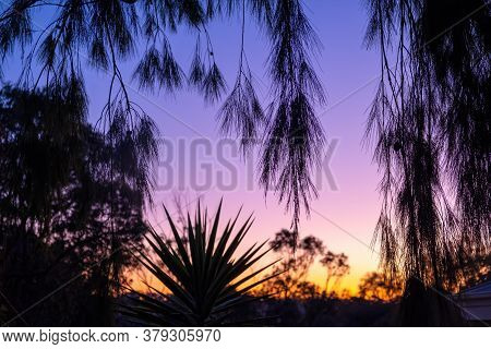 Tree Branches Silhouettes At Sunset - Beautiful Tranquil Scene